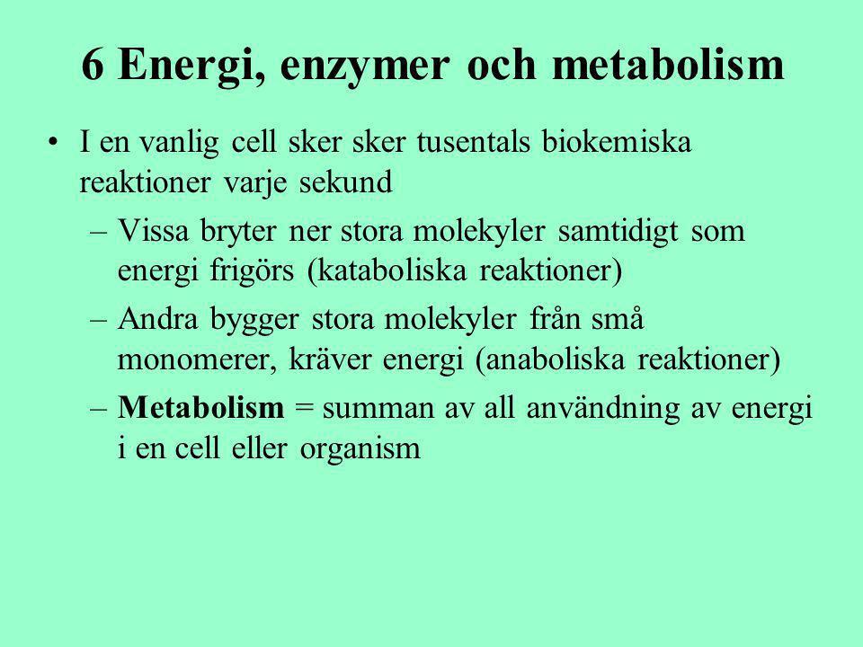 6 Energi, enzymer och metabolism I en vanlig cell sker sker tusentals biokemiska reaktioner varje sekund –Vissa bryter ner stora molekyler samtidigt s