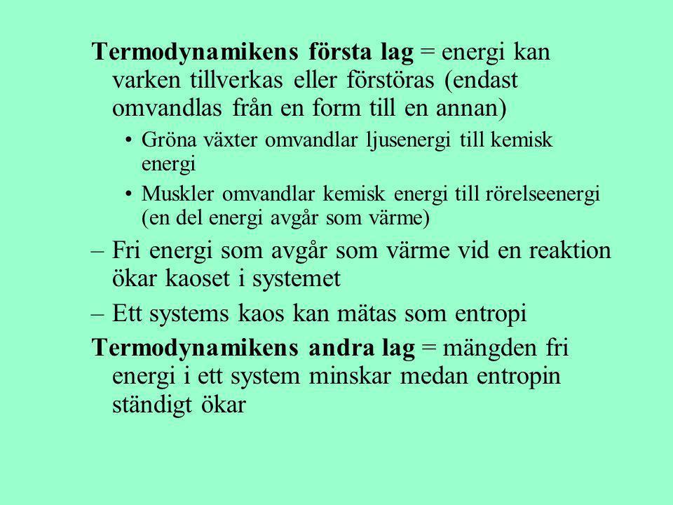 Termodynamikens första lag = energi kan varken tillverkas eller förstöras (endast omvandlas från en form till en annan) Gröna växter omvandlar ljusene