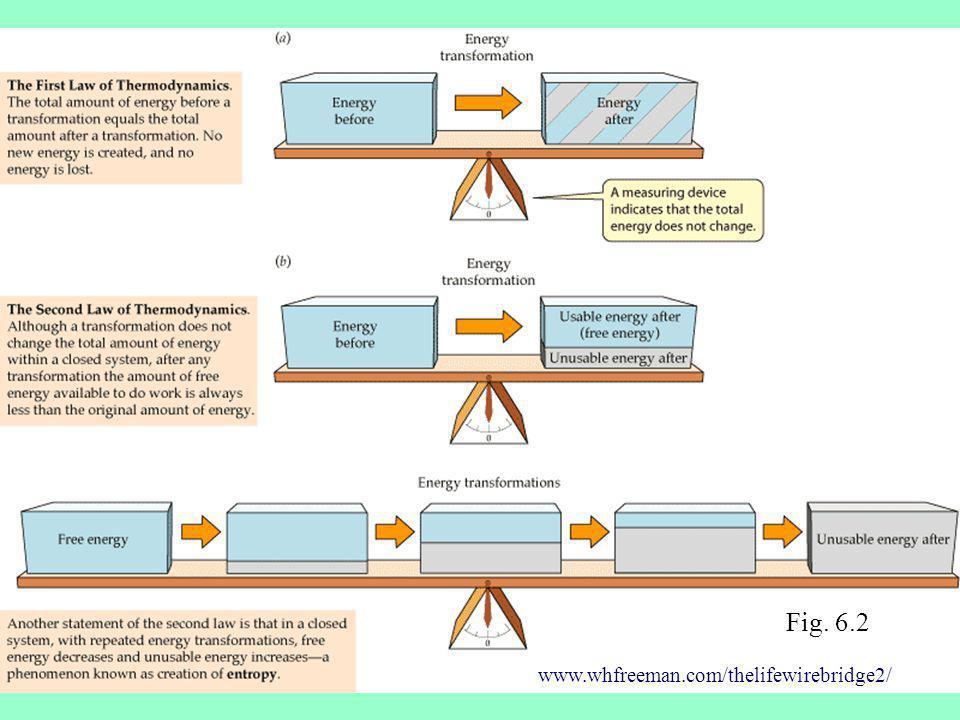 Fig. 6.2 www.whfreeman.com/thelifewirebridge2/