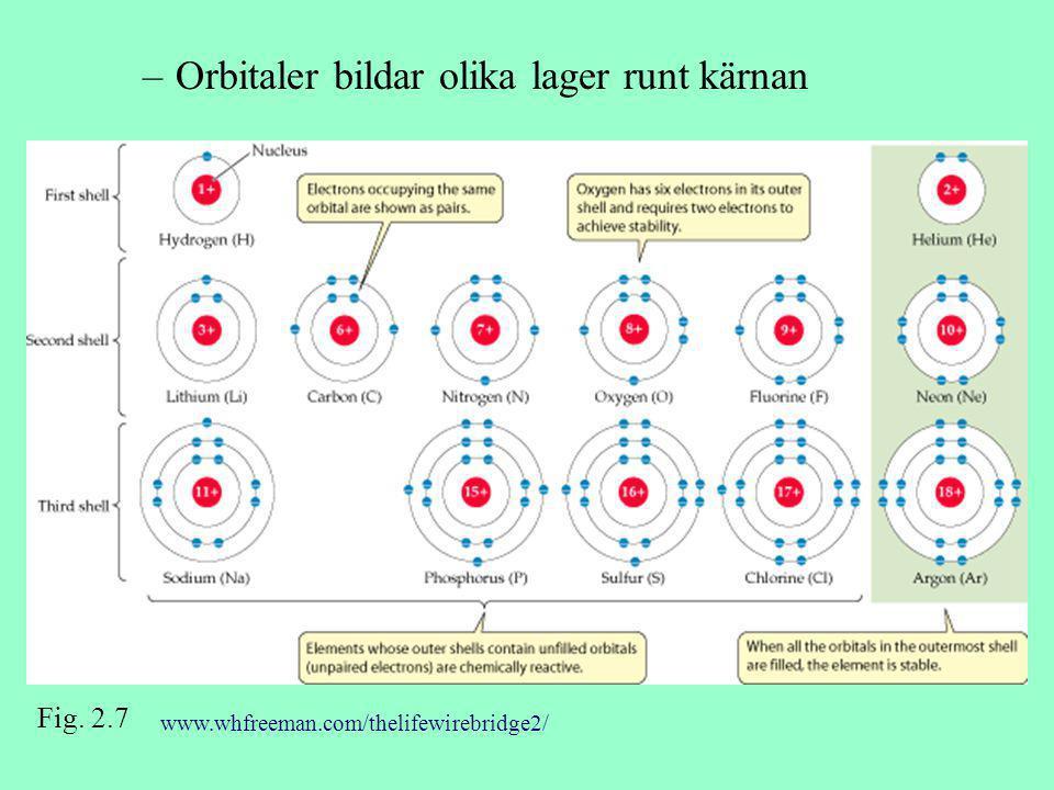 –Orbitaler bildar olika lager runt kärnan Fig. 2.7 www.whfreeman.com/thelifewirebridge2/