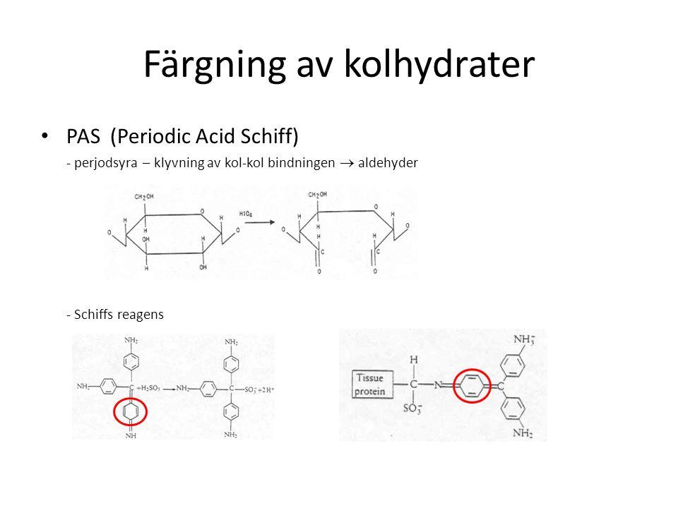 Färgning av kolhydrater PAS (Periodic Acid Schiff) - perjodsyra – klyvning av kol-kol bindningen  aldehyder - Schiffs reagens