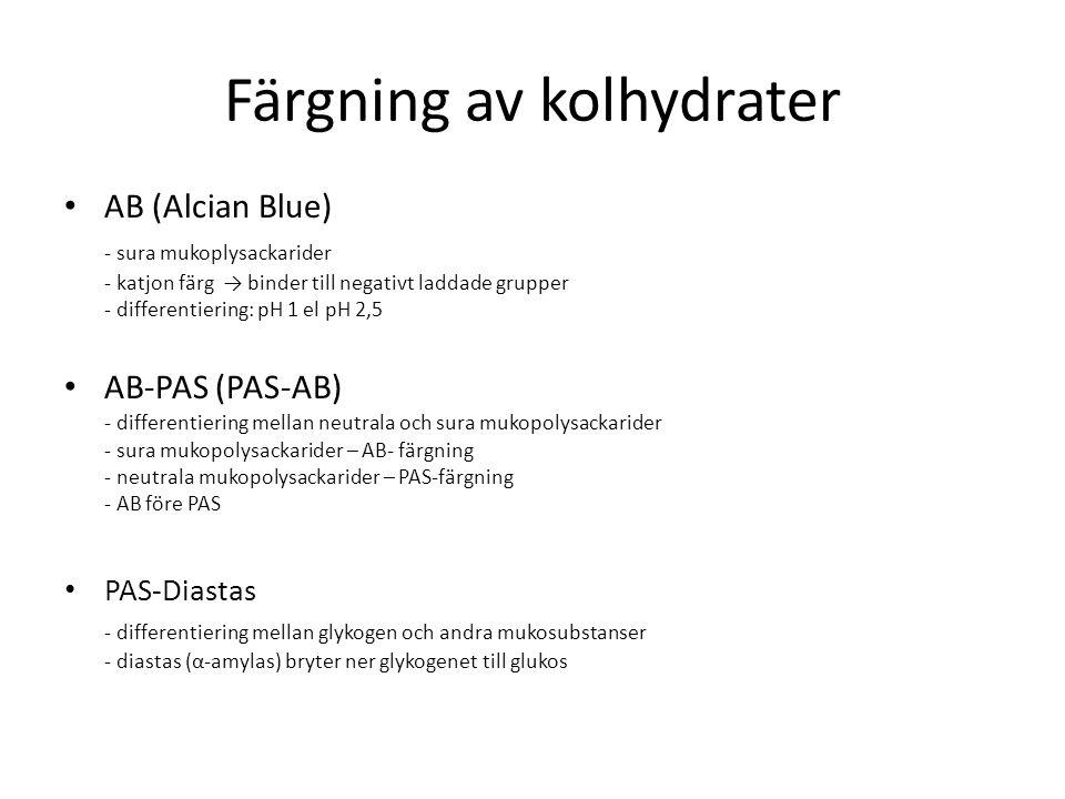 Färgning av kolhydrater AB (Alcian Blue) - sura mukoplysackarider - katjon färg → binder till negativt laddade grupper - differentiering: pH 1 el pH 2