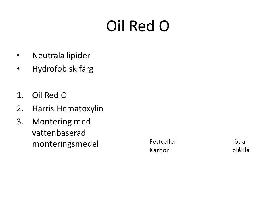 Oil Red O Neutrala lipider Hydrofobisk färg 1.Oil Red O 2.Harris Hematoxylin 3.Montering med vattenbaserad monteringsmedel Fettcellerröda Kärnor blåli