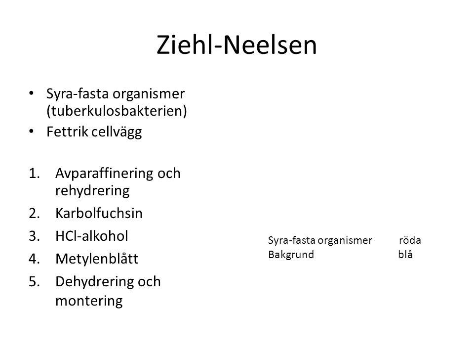 Ziehl-Neelsen Syra-fasta organismer (tuberkulosbakterien) Fettrik cellvägg 1.Avparaffinering och rehydrering 2.Karbolfuchsin 3.HCl-alkohol 4.Metylenbl