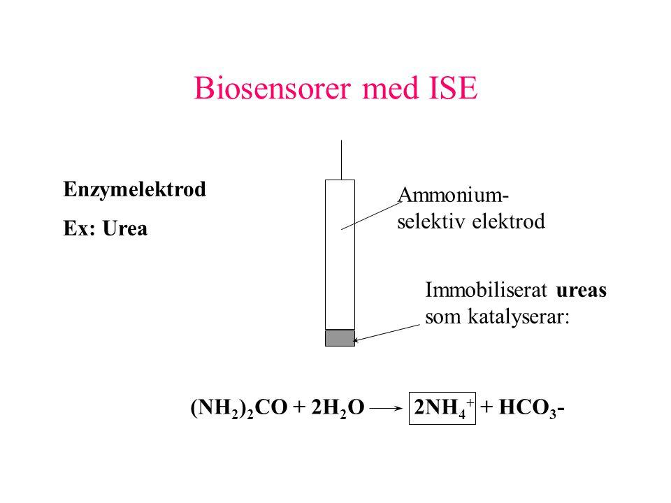 Biosensorer med ISE Enzymelektrod Ex: Urea Ammonium- selektiv elektrod Immobiliserat ureas som katalyserar: (NH 2 ) 2 CO + 2H 2 O2NH 4 + + HCO 3 -