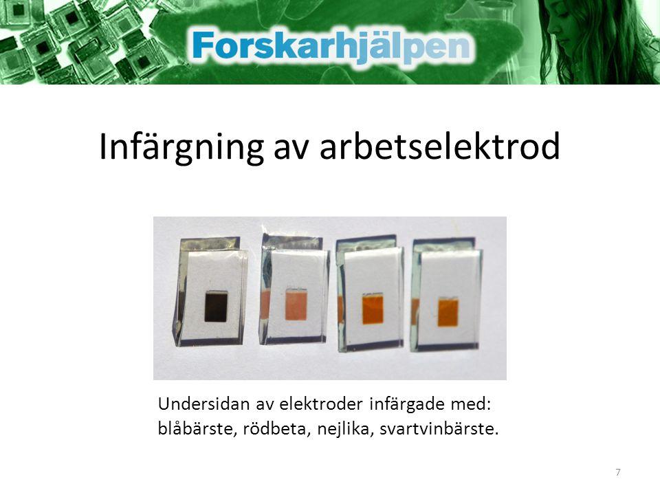 Undersidan av elektroder infärgade med: blåbärste, rödbeta, nejlika, svartvinbärste. 7