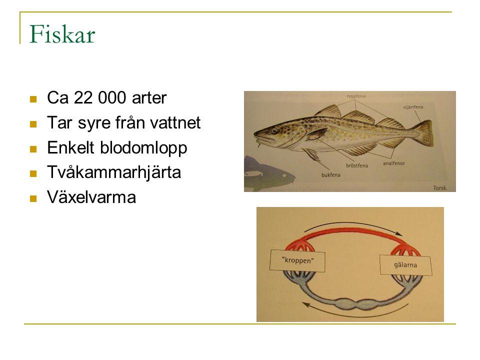 Fiskar Ca 22 000 arter Tar syre från vattnet Enkelt blodomlopp Tvåkammarhjärta Växelvarma