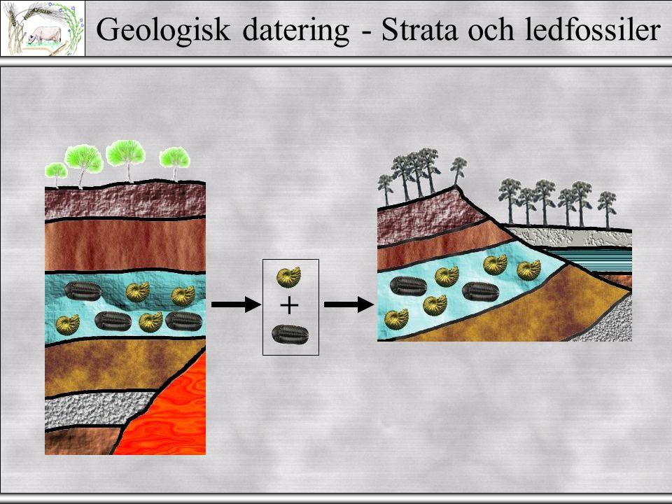 Geologisk datering - Strata och ledfossiler +