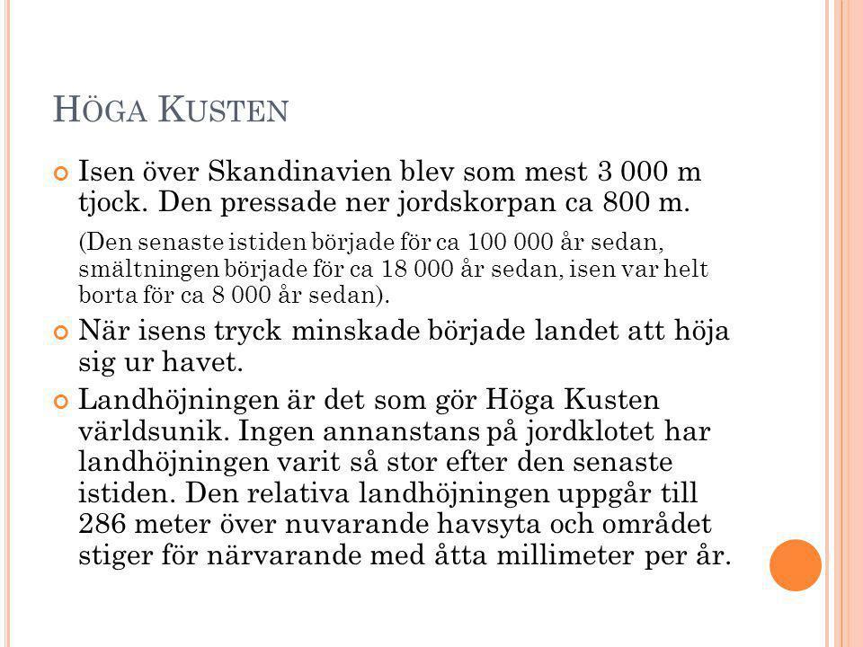H ÖGA K USTEN Isen över Skandinavien blev som mest 3 000 m tjock. Den pressade ner jordskorpan ca 800 m. (Den senaste istiden började för ca 100 000 å
