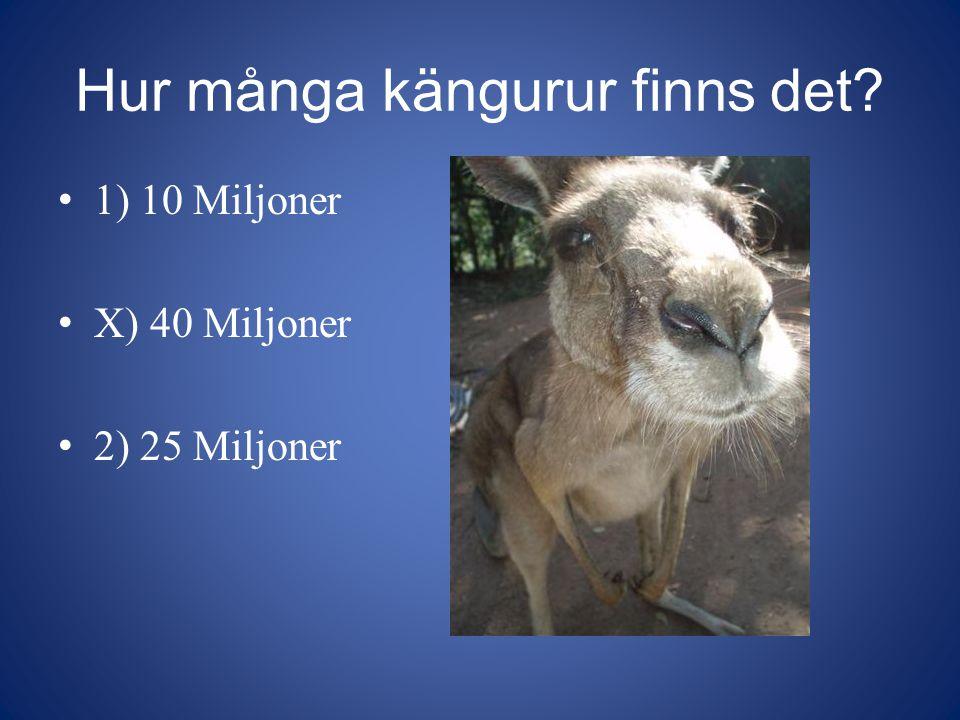 Hur många kängurur finns det? 1) 10 Miljoner X) 40 Miljoner 2) 25 Miljoner