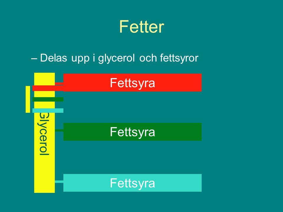 Fetter –Delas upp i glycerol och fettsyror Glycerol Fettsyra