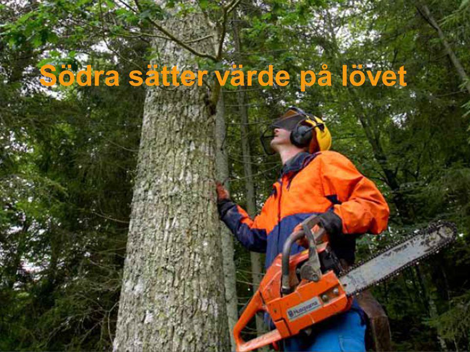 Södra Skog Svenskt lövvirke Fel och brister