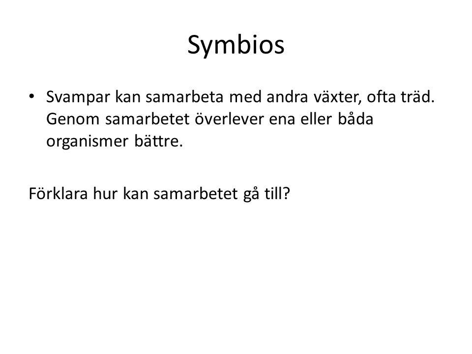 Känner du till fler organismer som lever i symbios.