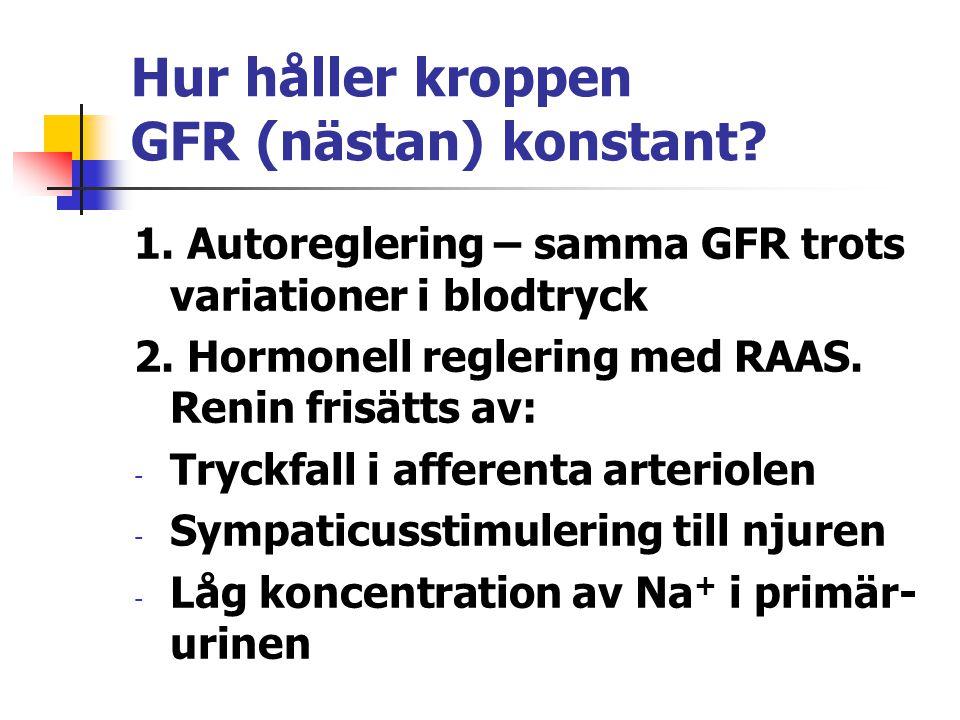 Hur håller kroppen GFR (nästan) konstant? 1. Autoreglering – samma GFR trots variationer i blodtryck 2. Hormonell reglering med RAAS. Renin frisätts a