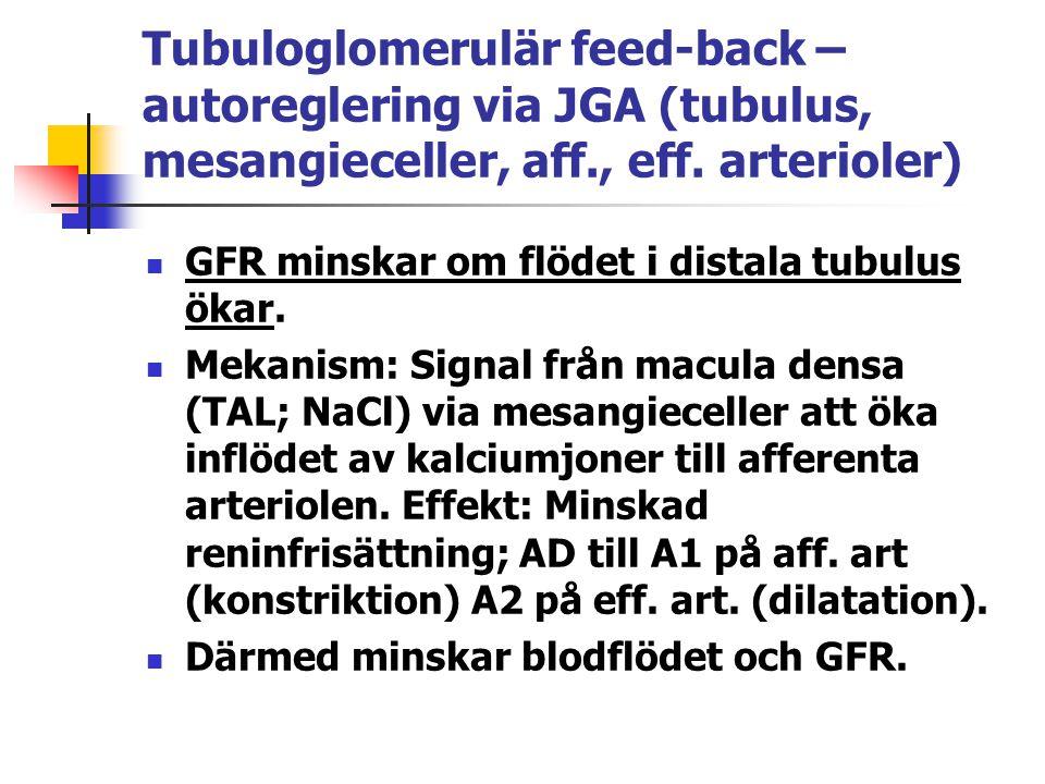 Tubuloglomerulär feed-back – autoreglering via JGA (tubulus, mesangieceller, aff., eff. arterioler) GFR minskar om flödet i distala tubulus ökar. Meka