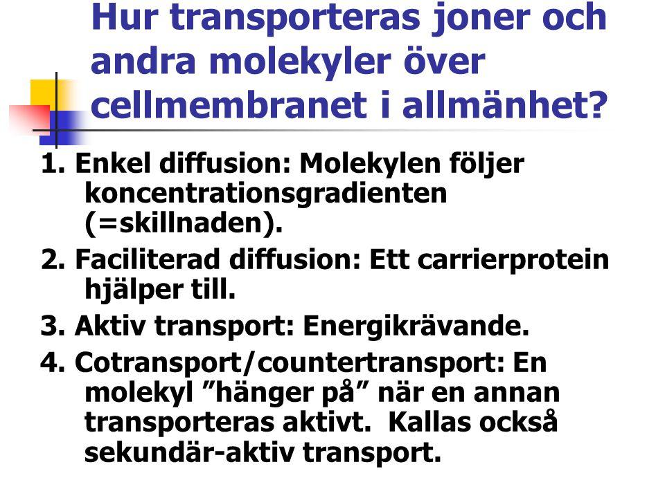 Hur transporteras joner och andra molekyler över cellmembranet i allmänhet? 1. Enkel diffusion: Molekylen följer koncentrationsgradienten (=skillnaden