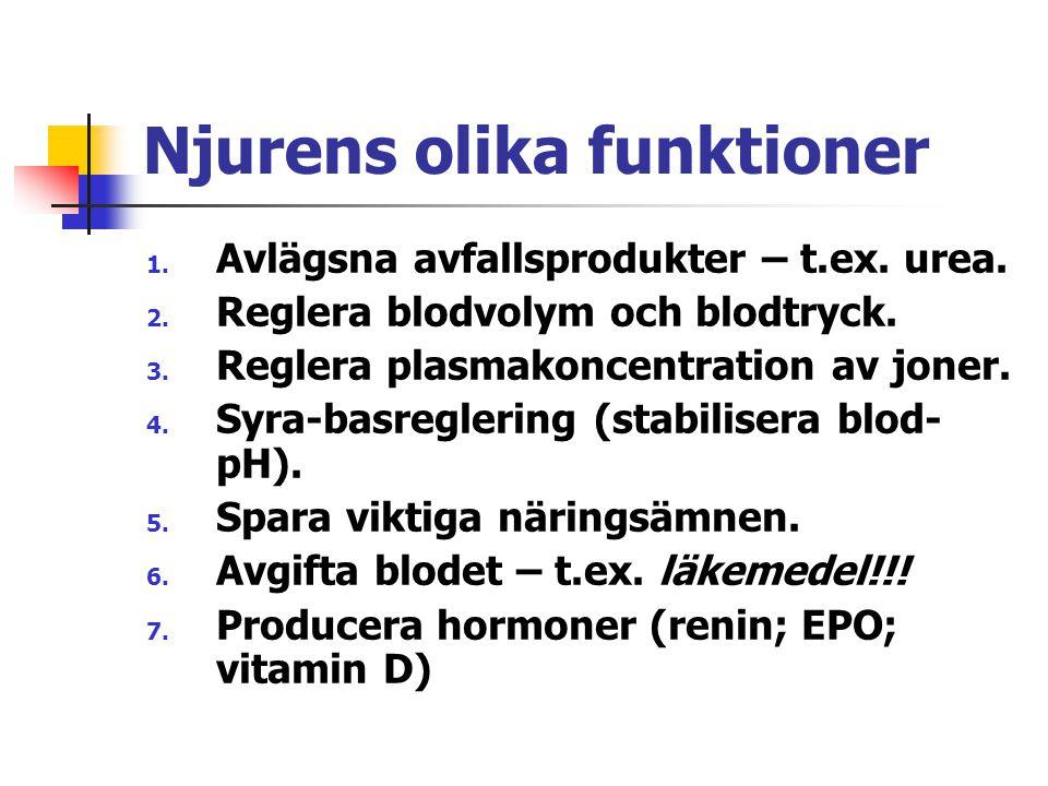 Njurens olika funktioner 1. Avlägsna avfallsprodukter – t.ex. urea. 2. Reglera blodvolym och blodtryck. 3. Reglera plasmakoncentration av joner. 4. Sy