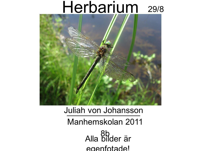 Herbarium Juliah von Johansson 8b Manhemskolan 2011 ________________ Alla bilder är egenfotade.