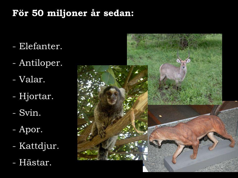 För 50 miljoner år sedan: - Elefanter. - Antiloper. - Valar. - Hjortar. - Svin. - Apor. - Kattdjur. - Hästar.