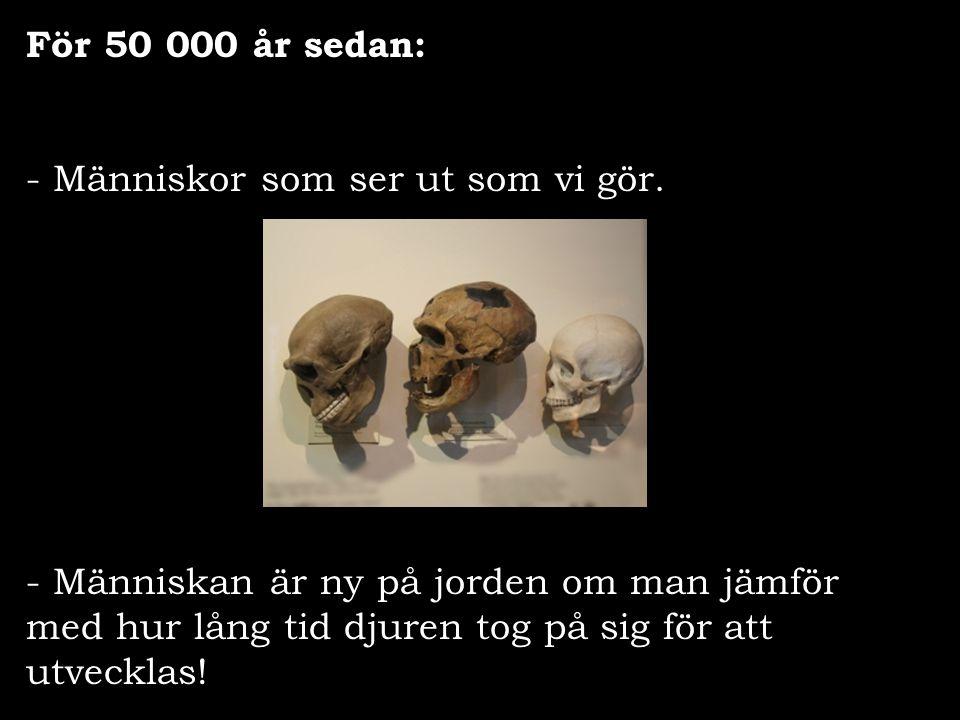 För 50 000 år sedan: - Människor som ser ut som vi gör. - Människan är ny på jorden om man jämför med hur lång tid djuren tog på sig för att utvecklas