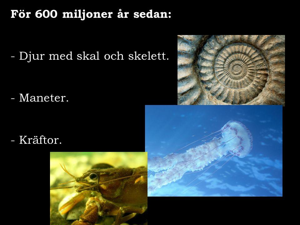 För 600 miljoner år sedan: - Djur med skal och skelett. - Maneter. - Kräftor.