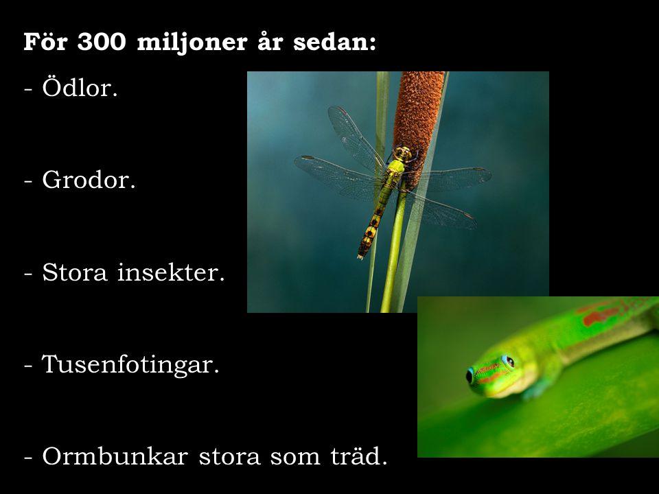 För 300 miljoner år sedan: - Ödlor. - Grodor. - Stora insekter. - Tusenfotingar. - Ormbunkar stora som träd.