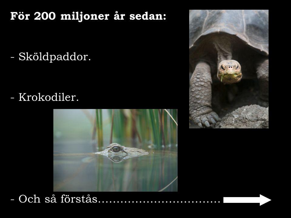 För 200 miljoner år sedan: - Sköldpaddor. - Krokodiler. - Och så förstås……………………………