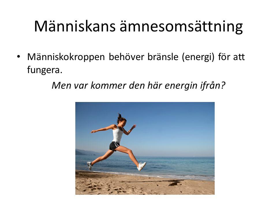 Människans ämnesomsättning Människokroppen behöver bränsle (energi) för att fungera. Men var kommer den här energin ifrån?