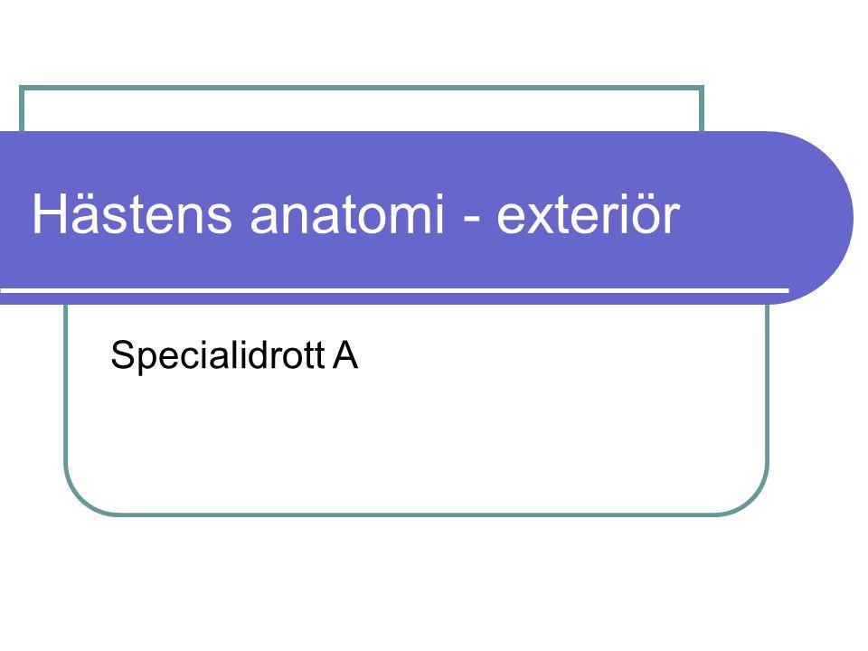 Hästens anatomi - exteriör Specialidrott A