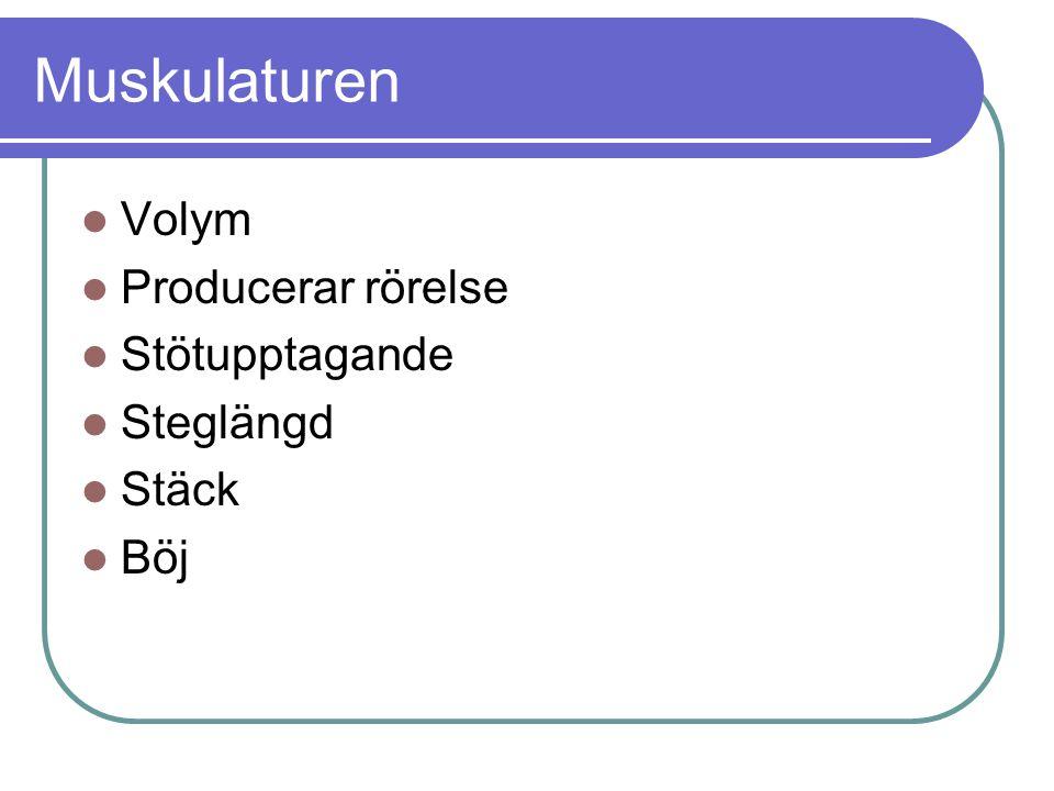 Muskulaturen Volym Producerar rörelse Stötupptagande Steglängd Stäck Böj