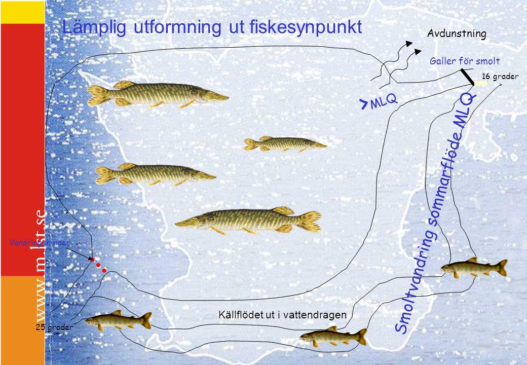 Lämplig utformning ut fiskesynpunkt Vandringshinder 25 grader 16 grader Avdunstning Galler för smolt Smoltvandring sommarflöde MLQ > MLQ Källflödet ut
