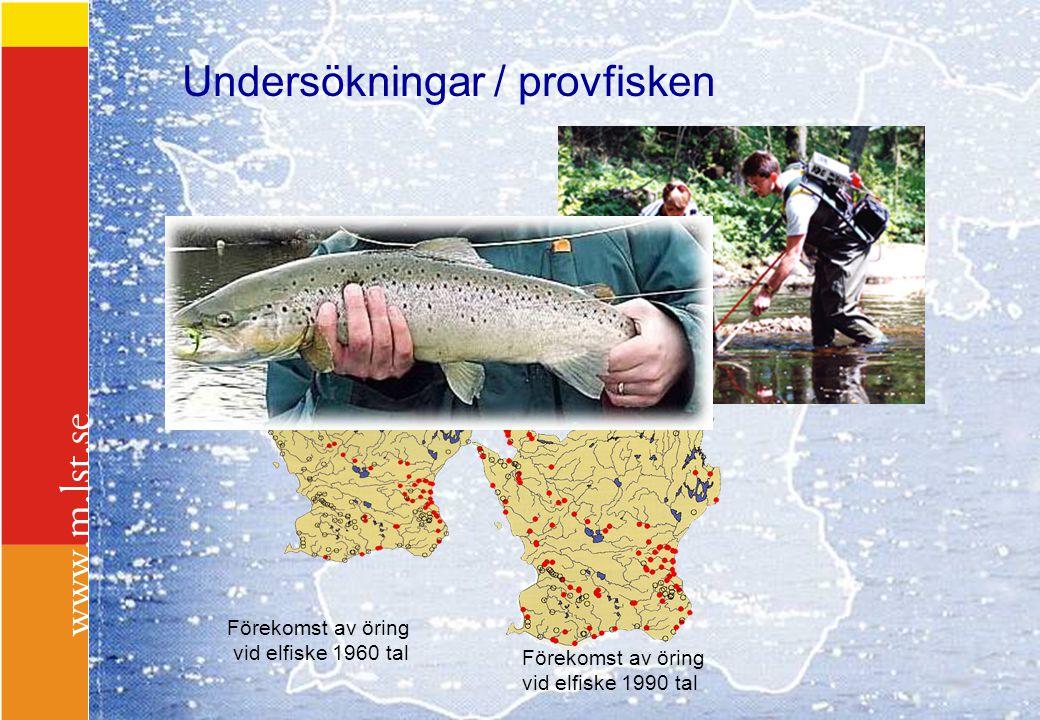Undersökningar / provfisken Förekomst av öring vid elfiske 1960 tal Förekomst av öring vid elfiske 1990 tal