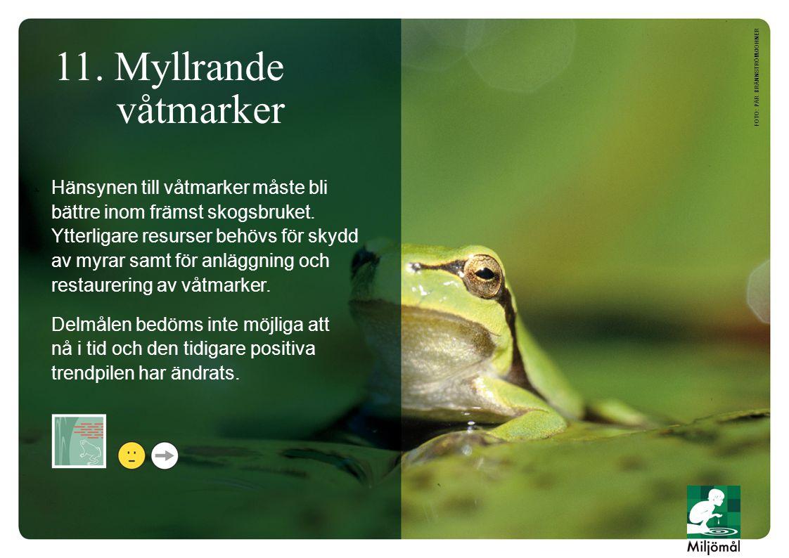 11. Myllrande våtmarker Hänsynen till våtmarker måste bli bättre inom främst skogsbruket. Ytterligare resurser behövs för skydd av myrar samt för anlä