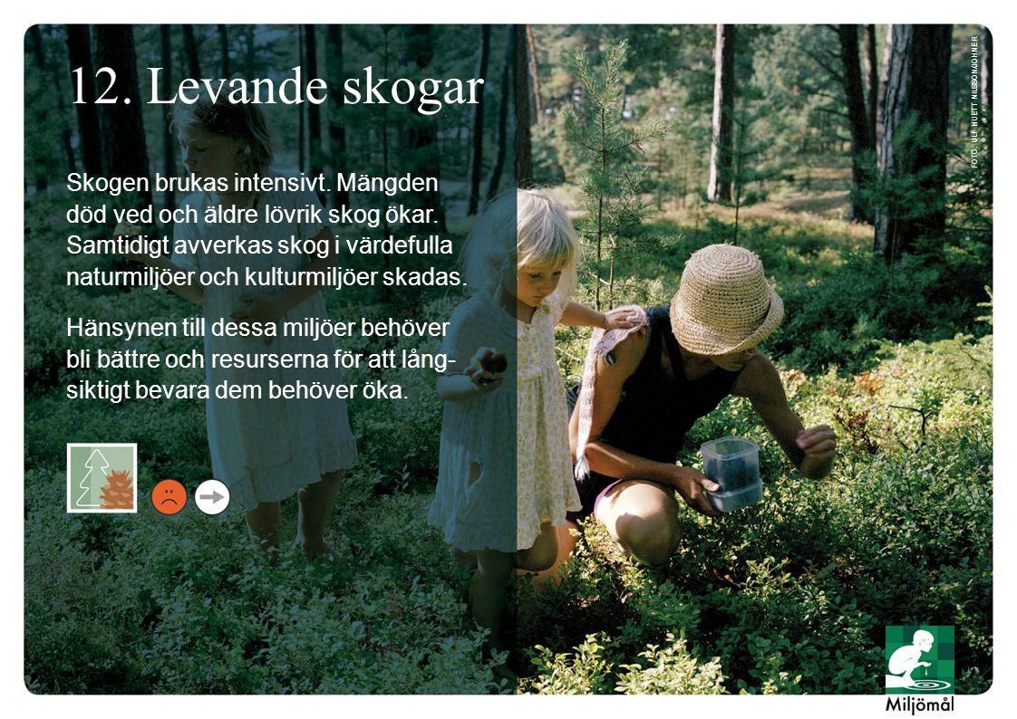 12. Levande skogar Skogen brukas intensivt. Mängden död ved och äldre lövrik skog ökar. Samtidigt avverkas skog i värdefulla naturmiljöer och kulturmi