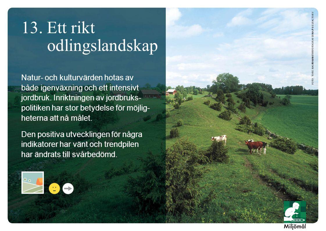 13. Ett rikt odlingslandskap Natur- och kulturvärden hotas av både igenväxning och ett intensivt jordbruk. Inriktningen av jordbruks- politiken har st