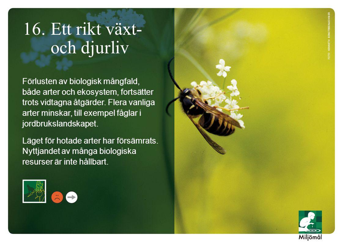16. Ett rikt växt- och djurliv Förlusten av biologisk mångfald, både arter och ekosystem, fortsätter trots vidtagna åtgärder. Flera vanliga arter mins