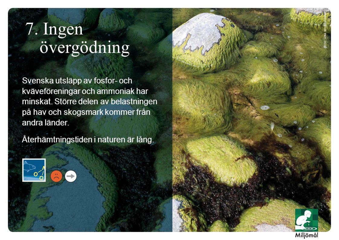 7. Ingen övergödning Svenska utsläpp av fosfor- och kväveföreningar och ammoniak har minskat. Större delen av belastningen på hav och skogsmark kommer