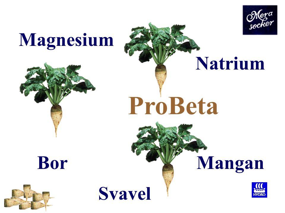 ProBeta Kväve är viktig för betans tidiga utveckling, speciellt för tillväxt av blad.
