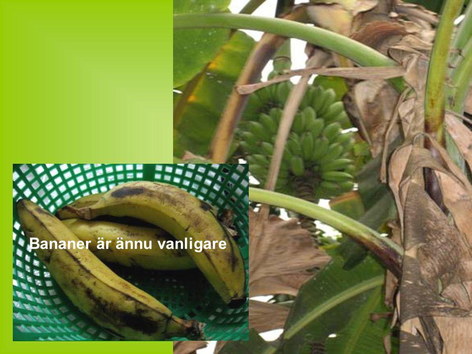 * Bananer är ännu vanligare