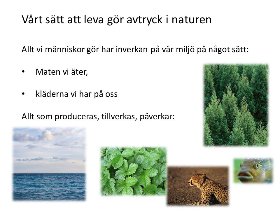 Vårt sätt att leva gör avtryck i naturen Allt vi människor gör har inverkan på vår miljö på något sätt: Maten vi äter, kläderna vi har på oss Allt som