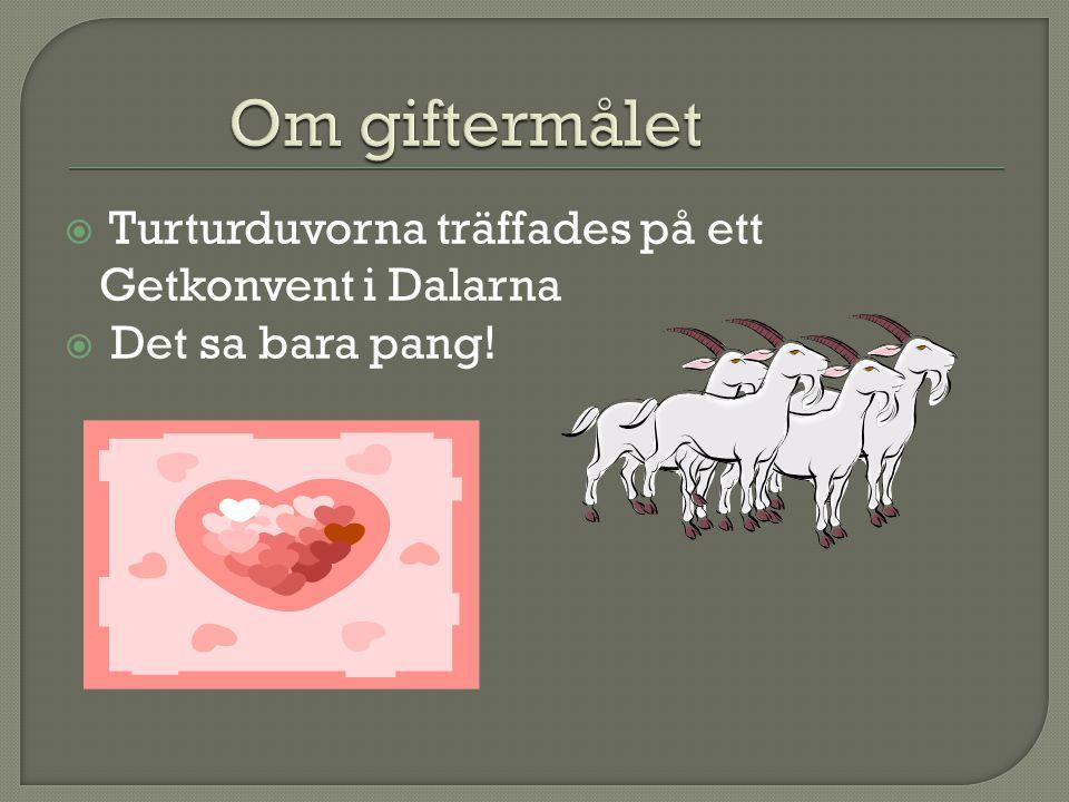  Turturduvorna träffades på ett Getkonvent i Dalarna  Det sa bara pang!