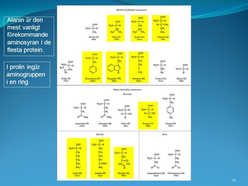 12 I prolin ing å r aminogruppen i en ring Alanin ä r den mest vanligt f ö rekommande aminosyran i de flesta protein.