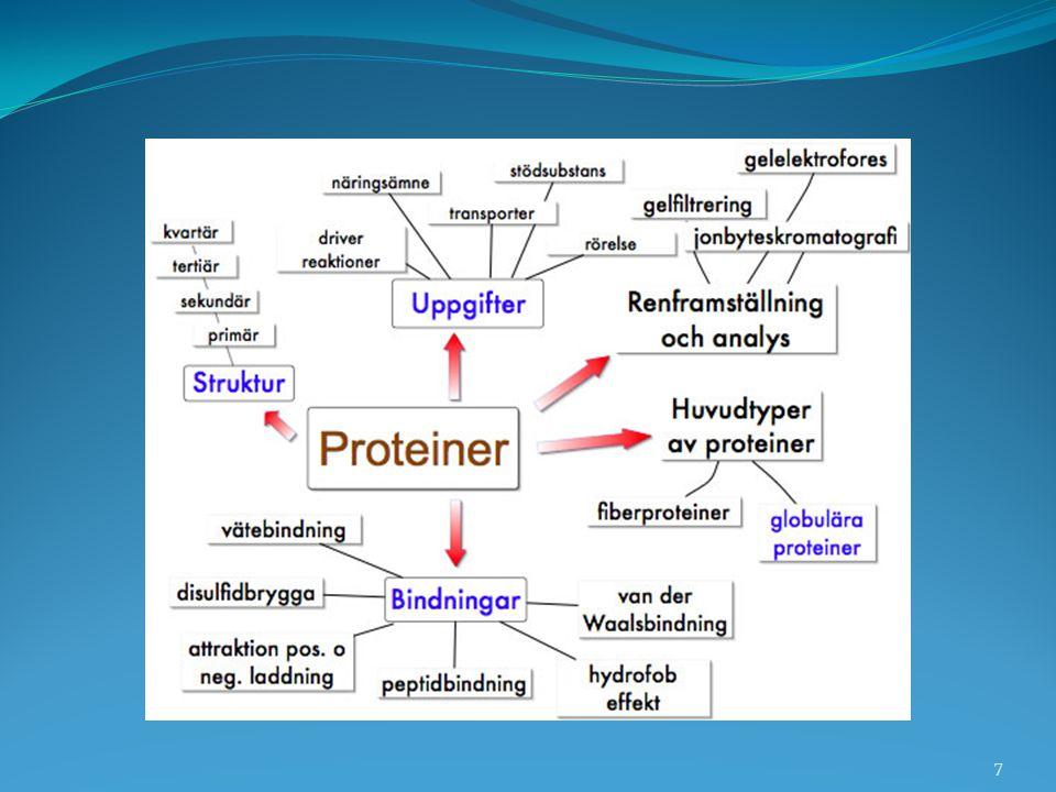Proteinets form bestämmer funktionen Två huvudtyper av proteiner: Fiberproteiner – peptidkedjans molekyler ligger utsträckta bredvid varandra och bildar trådar, fibrer.