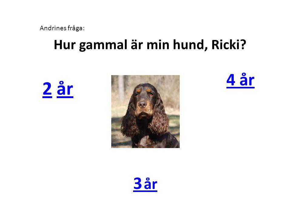 Hur gammal är min hund, Ricki? Andrines fråga: 22 årår 4 år 3 år
