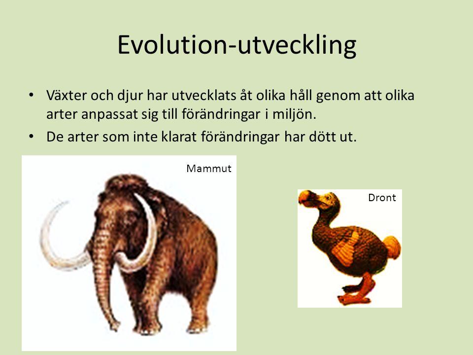 Evolution-utveckling Växter och djur har utvecklats åt olika håll genom att olika arter anpassat sig till förändringar i miljön. De arter som inte kla