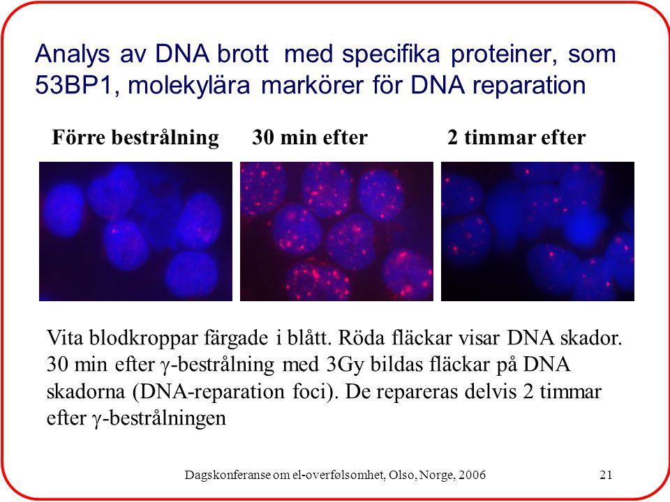 Dagskonferanse om el-overfølsomhet, Olso, Norge, 200621 Analys av DNA brott med specifika proteiner, som 53BP1, molekylära markörer för DNA reparation Vita blodkroppar färgade i blått.
