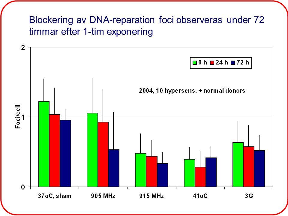 Dagskonferanse om el-overfølsomhet, Olso, Norge, 200633 Blockering av DNA-reparation foci observeras under 72 timmar efter 1-tim exponering Control50 Hz 915 MHz41 0 C