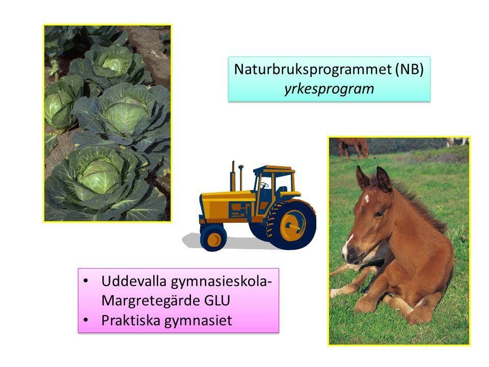Naturbruksprogrammet (NB) yrkesprogram Naturbruksprogrammet (NB) yrkesprogram Uddevalla gymnasieskola- Margretegärde GLU Praktiska gymnasiet Uddevalla