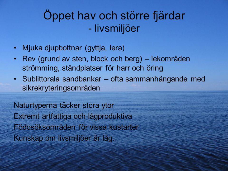 Öppet hav och större fjärdar - livsmiljöer Mjuka djupbottnar (gyttja, lera) Rev (grund av sten, block och berg) – lekområden strömming, ståndplatser f