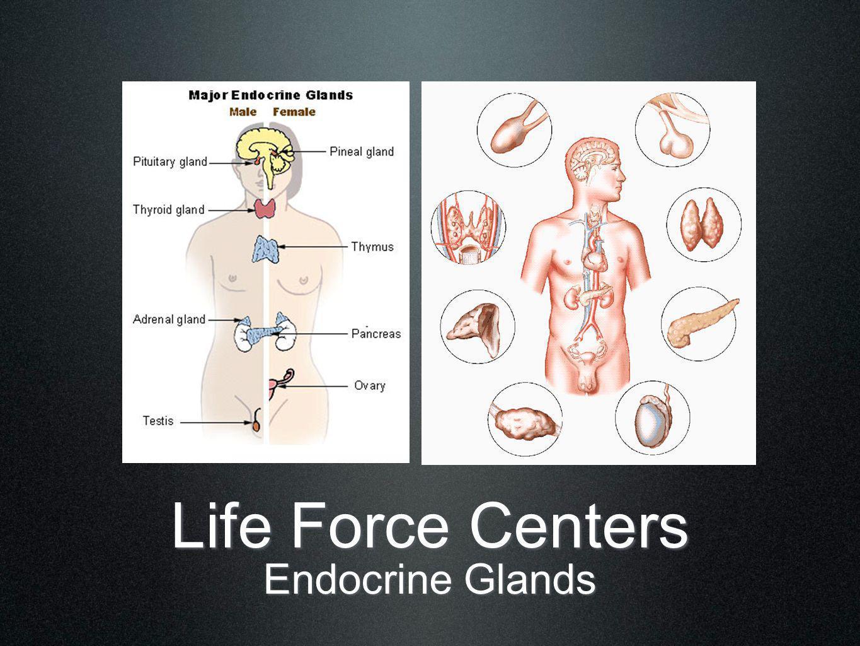 Life Force Centers Centers & Pathways Sushumna Ida & Pingala Lotuses/Chakras & Pathways Caduceus